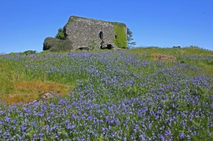 Aros Castle in spring. Courtesy of Roger Johns